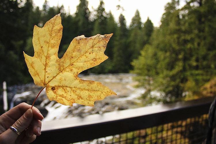 Road Trip: Vancouver Island