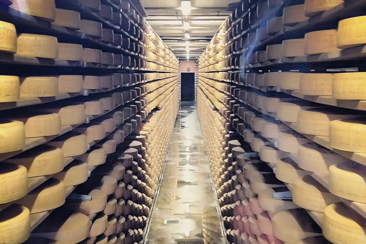 How Swiss Cheese is Made