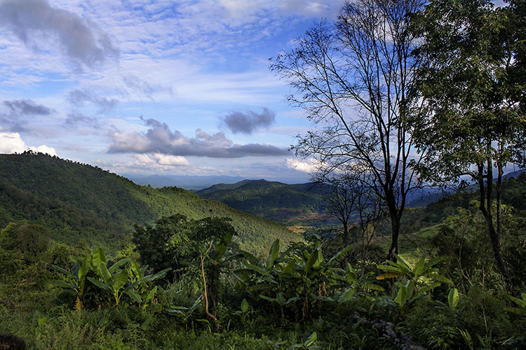 Chiang Mai: Jungle Trekking in Thailand