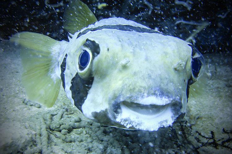 2011.06.19 scuba 058b 750x500
