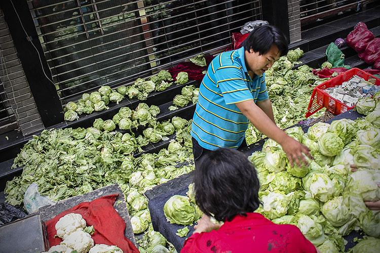 lettuce everywhere