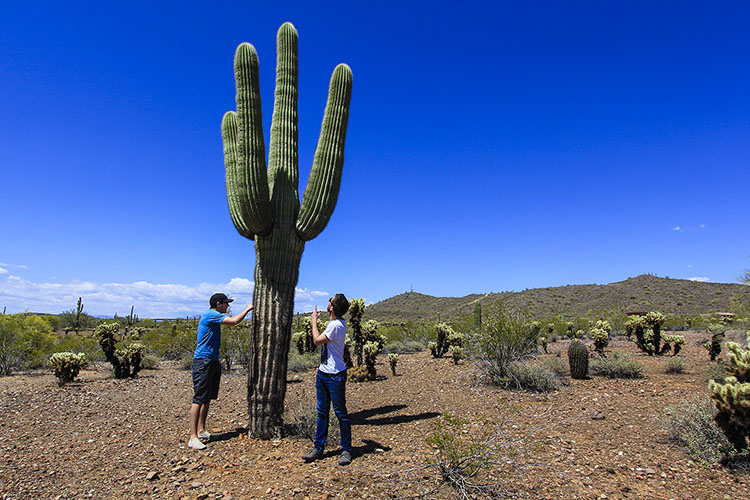 Cacti 1 - Arizona - Wanderlusters
