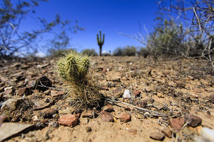 Cacti in Arizona - Wanderlusters