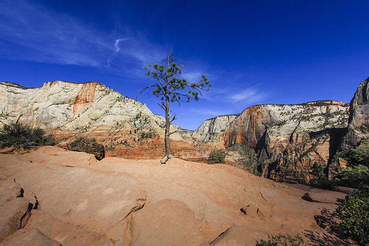Zion National Park: Angel's Landing