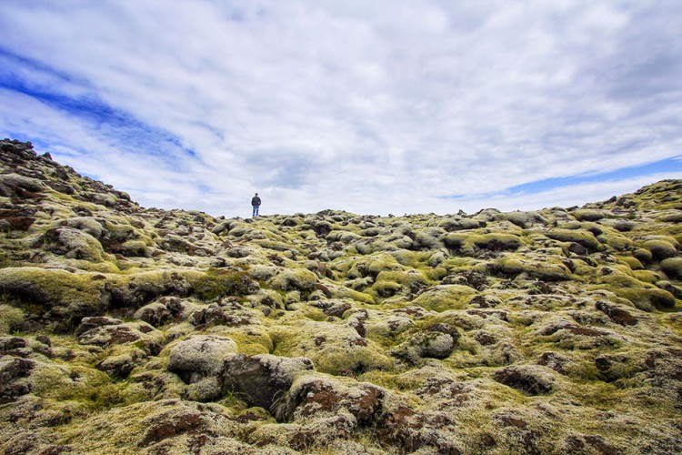Wanderlusters - Iceland Postcards - Moss Field large