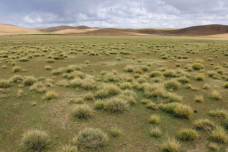 Bolivian Fields - Bolivia Salt Flat Tour - Wanderlusters