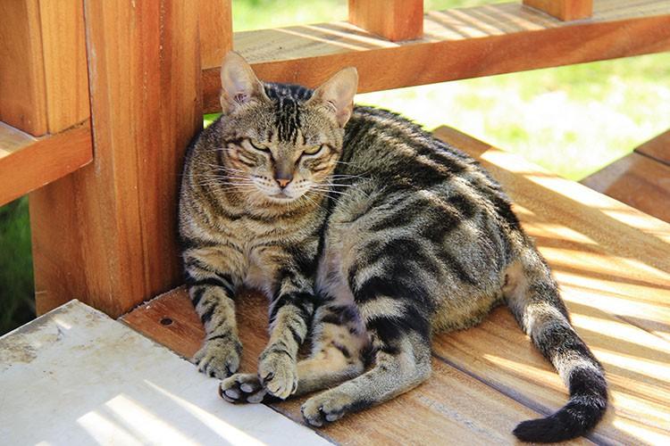 Cats of Varadero Cuba - Wanderlusters