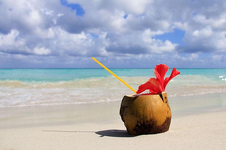 Cuba - Coconuts on Varadero Beach - Wanderlusters