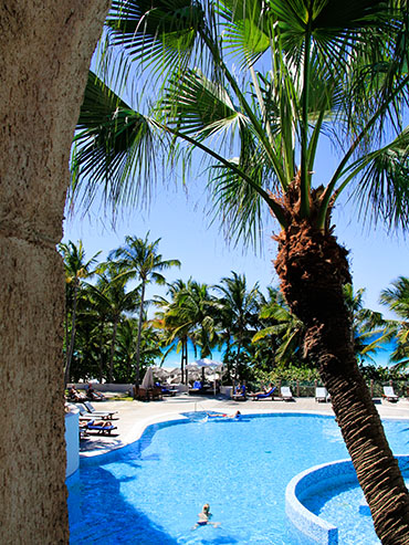Cuba - Melia Las Americas Pool Palm Tree - Wanderlusters