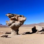 Desert Stone Tree - Bolivia Salt Flats Tour - Wanderlusters