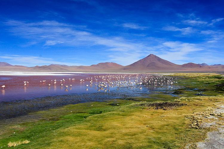 Flamingoes at Red Lagoon - Bolivia Salt Flats Tour - Wanderlusters