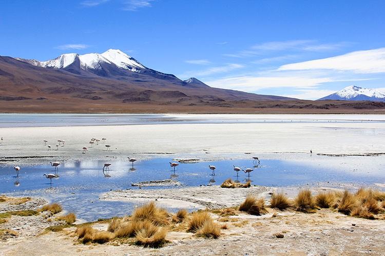 Laguna Cañapa - Bolivia Salt Flats Tour - Wanderlusters