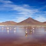 Laguna Colorada Flamingoes - Red Lagoon - Bolivia Salt Flats - Wanderlusters