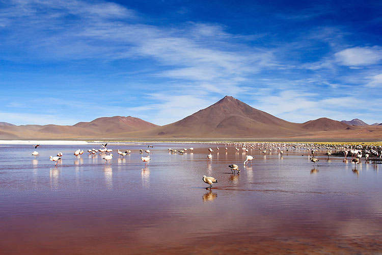Bolivian Salt Flats Tour: Day 2