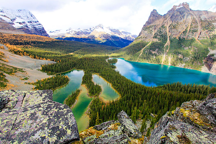 Lake O'Hara: Larch Madness