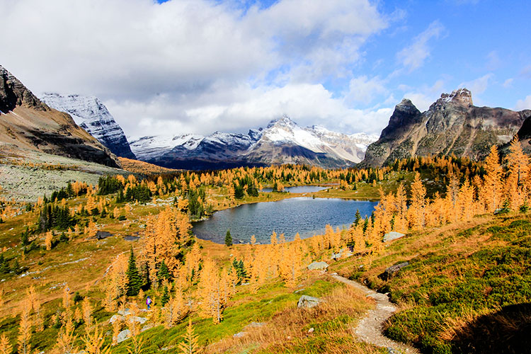 Larches at Lake OHara - Canada - Wanderlusters