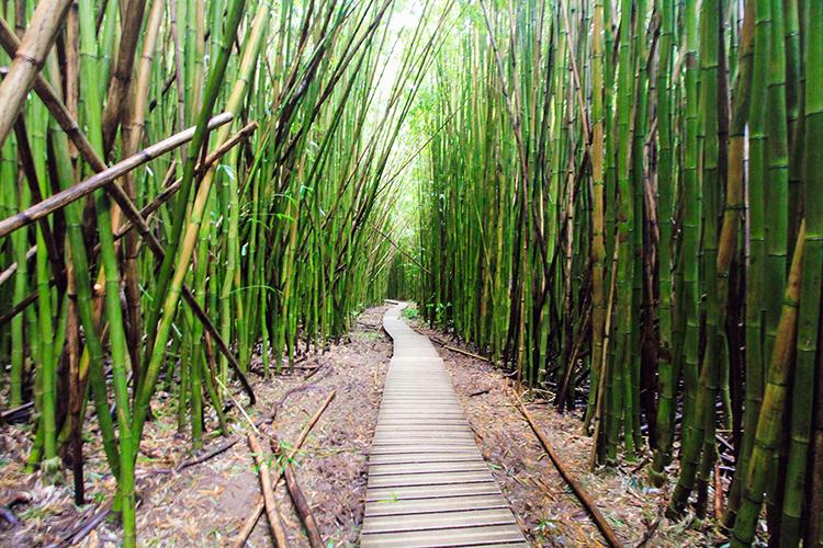 Maui: The Road to Hana – Part 1