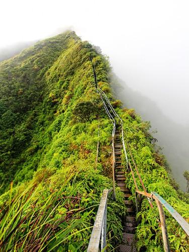 gate to jungle heaven