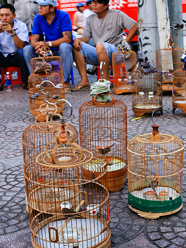 Bird Cages in Siagon - Ho Chi Minh City Vietnam - Wanderlusters (3x4)