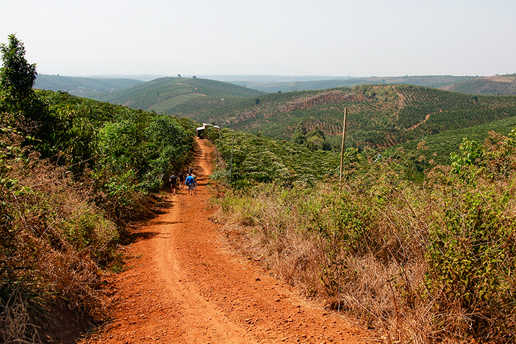 Coffee Beans in Vietnam - Dalat - Wanderlusters (750x500)