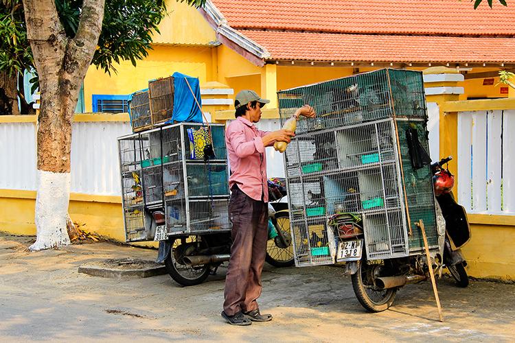 Hoi An Bird Man - Vietnam - Wanderlusters