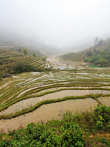 Sapa Rice Paddies - Vietnam - Wanderlusters (3x4)