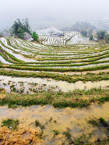 Sapa Rice Terraces - Vietnam - Wanderlusters (3x4)