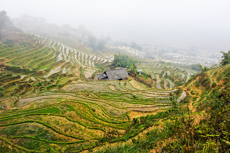 Sapa: Rice Paddies For Days