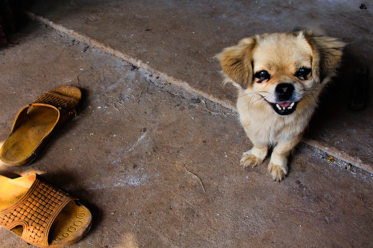 Vietnam Dog - Dalat - Wanderlusters (750x500)
