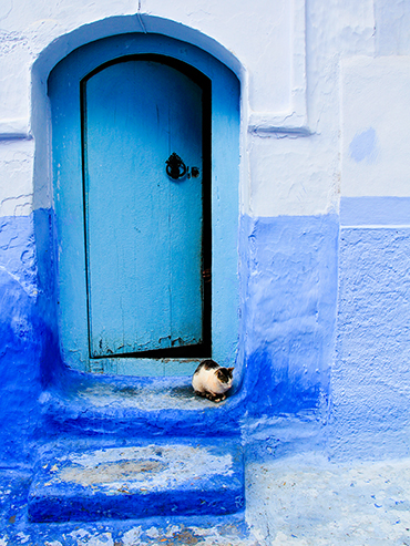 Cats of Chefchaouen - Morocco - Wanderlusters