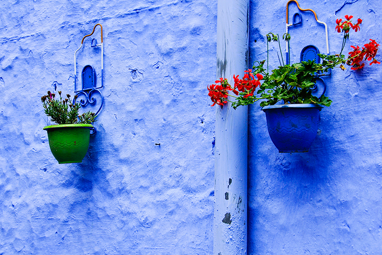 Chefchaouen Flower Pots - Morocco - Wanderlusters