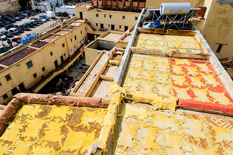 Drying Hides - Fes Leather Tannery - Morocco