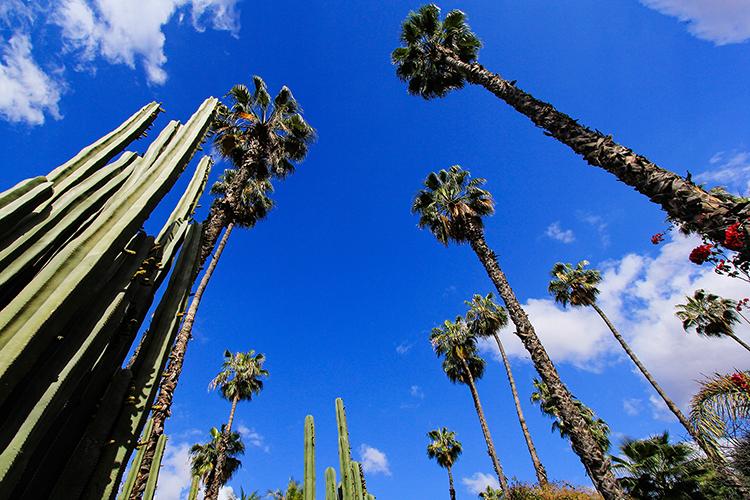 Jardin Majorelle Cacti - Marrakesh Morocco