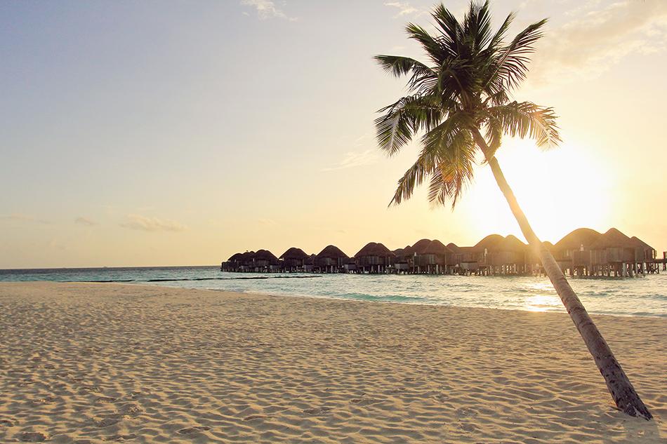 Maldives: The Perfect Honeymoon