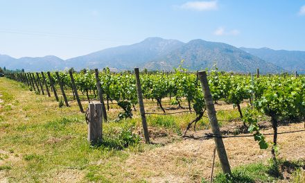 Chile: Wine Touring Casablanca