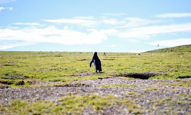 Patagonia: An Island of Penguins