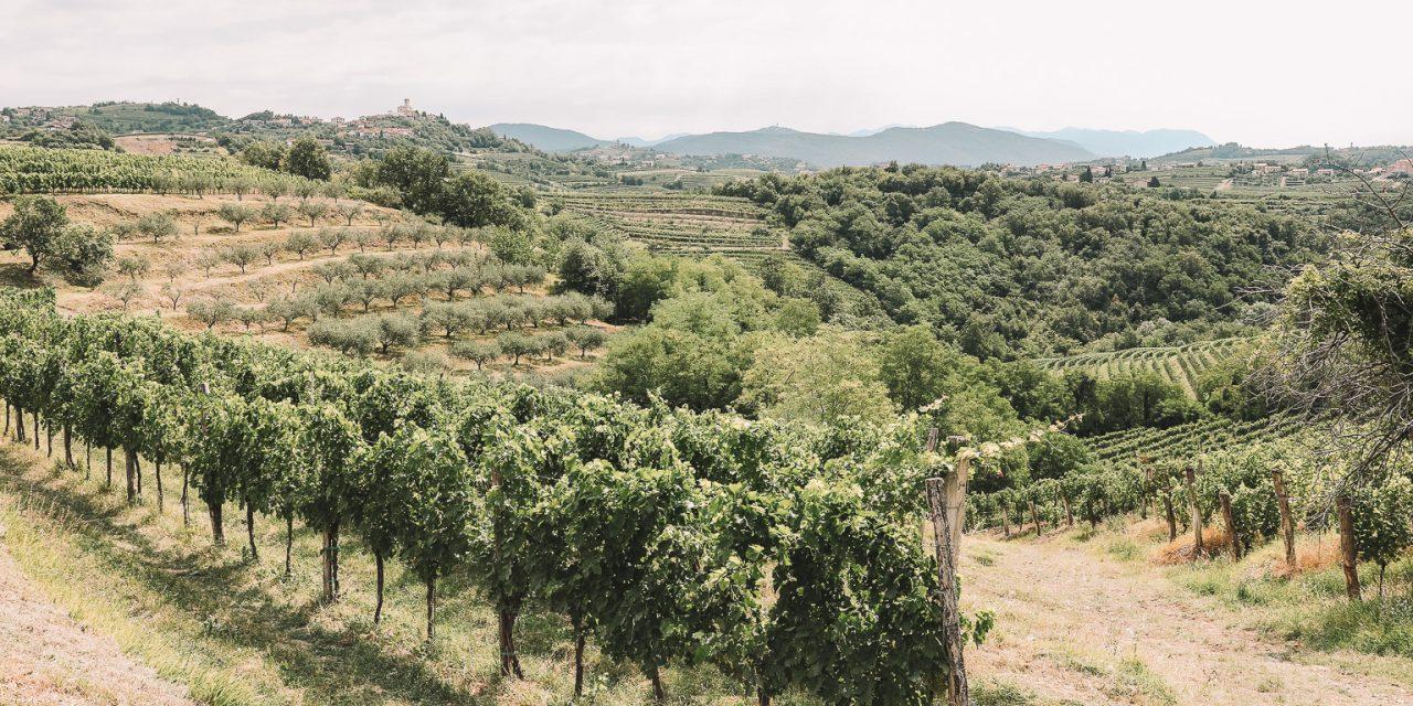 Slovenia's Tuscany: Primorska Wine Region