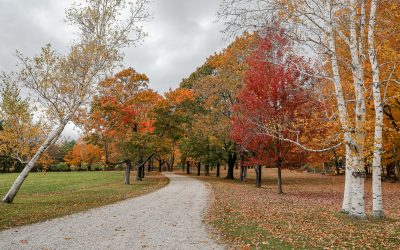 Fall in New England: The Ultimate Road Trip